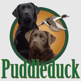 Puddleduck Retrievers | Morrill, Maine | Labrador Retrievers