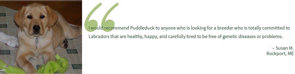 Puddleduck Retrievers